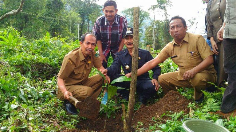 Ratusan Pohon Manggis Ditanam di Simancuang, Wujudkan Nagari Mandiri Pangan